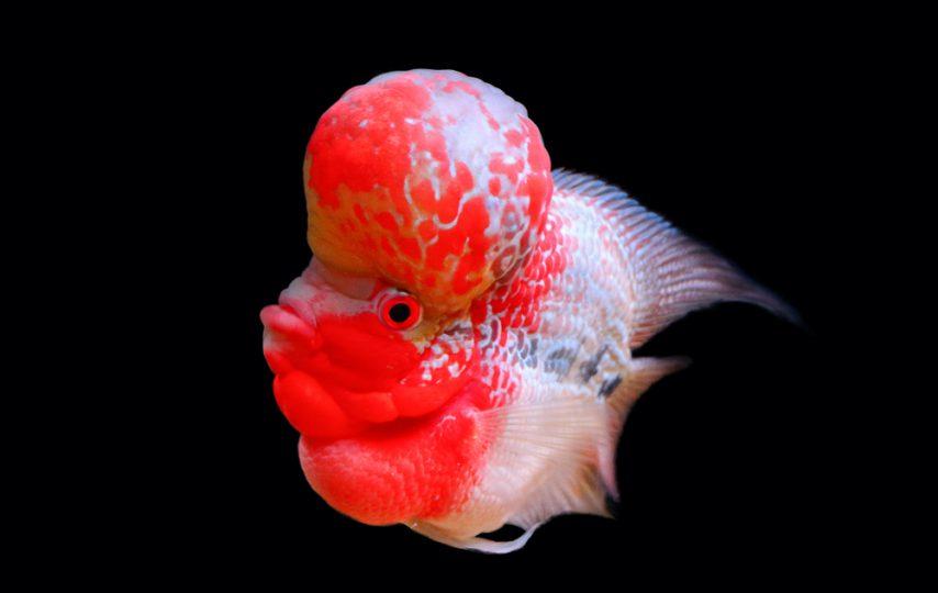 Bisnis Ikan Hias